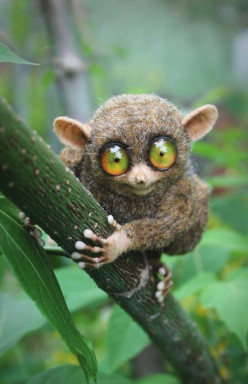 Are Tarsiers Great Pets?