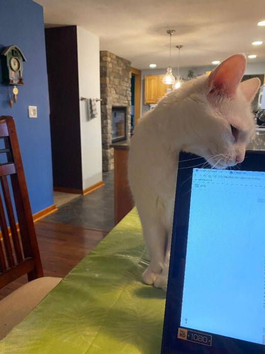 Stop working and pay attention to me, Nice Human. Hum...She's not budging. I have another move up my sleeve (smirk).