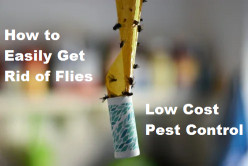 How to Easily Get Rid of Flies