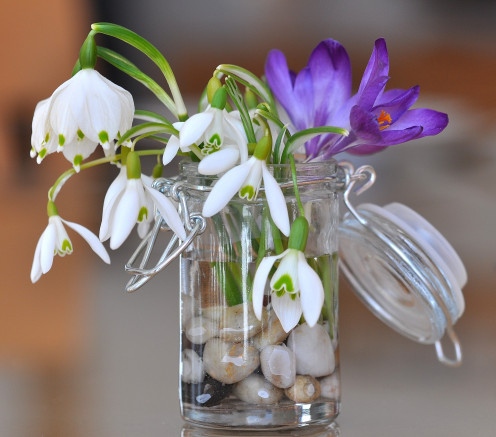 Lily of the valley in container with stones.