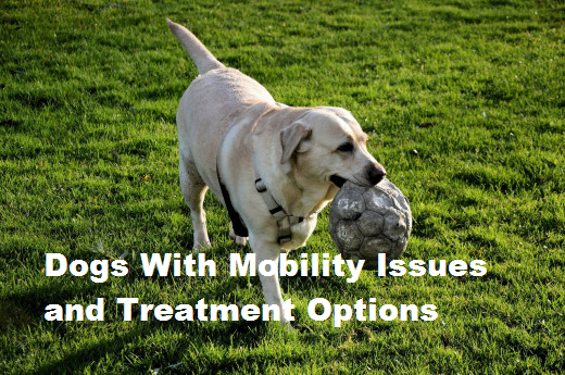 Sometimes treating a dog with mobility issues can be as easy as changing things at home.