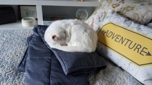 I have the whole bed, but I must fit on this little square blanket.