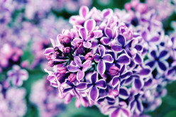 Ten Poems: 3 & 4 - Night and the Lilac