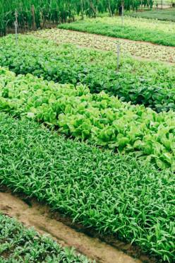 How To Make Money Through Urban Farming