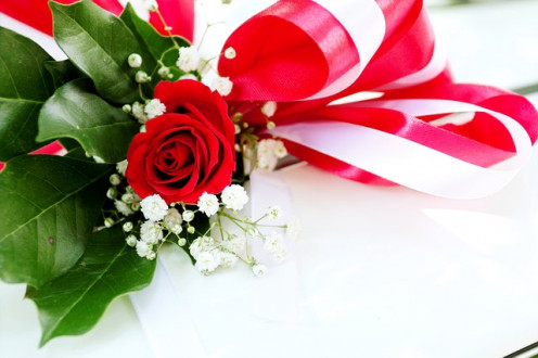 Gift Red Rose