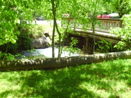 Bridge in the campground