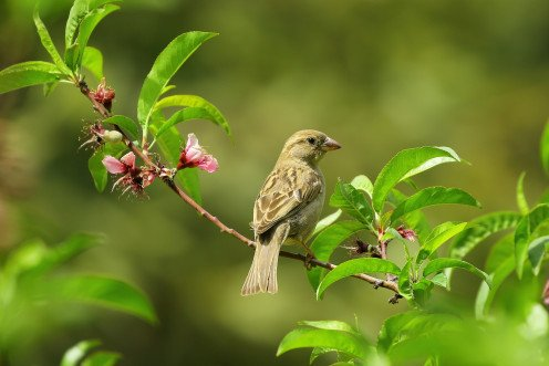 Blossoming of flowers, spreading of the fragrance of flowers, birds twitter are all Are Necessary.