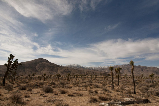 The Mojave Desert where there is little opportunity for outsiders to find jobs and the landscape unforgiving.