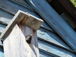 More Tips on Building, Designing Your Birdhouse