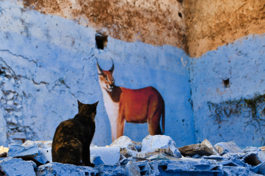 Chefchaouen is home to a large population of cats