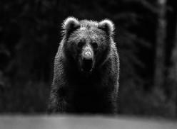 Bears & Fools