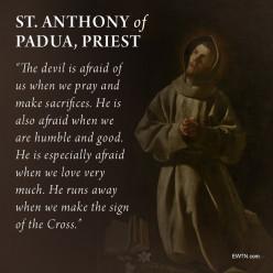 Reflections of a Paduan