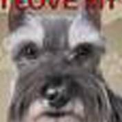 heididoghyde profile image