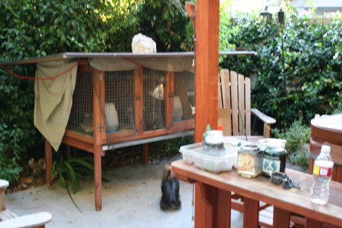 This is an old rabbit hutch we use for the older baby Quail.  Our rabbits are roaming free in our Pine forest so they don't need it any longer.