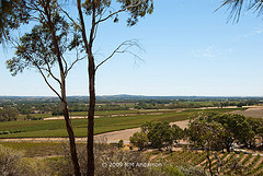 The Barossa Valley, South Australia.