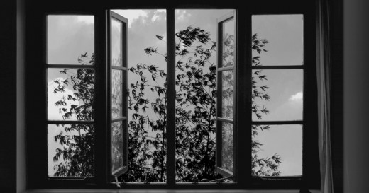 24 Frames (2017). Directed by Abbas Kiarostami