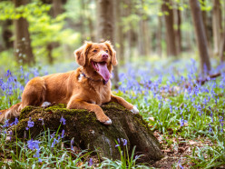 7 Tips to Groom Your Dog at Home