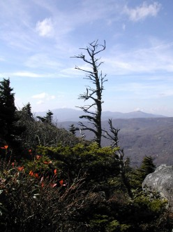 Mountain Lions, Trout and Great Scenery in the Beautiful Blue Ridge Mountains of North Carolina