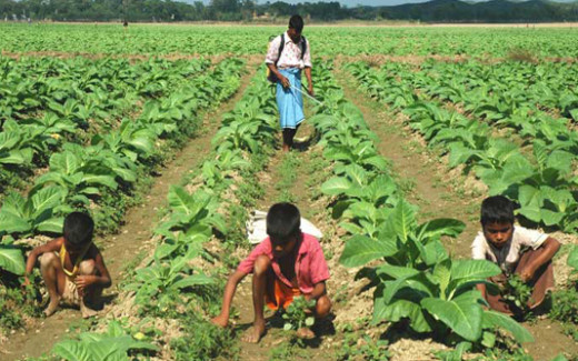 Agricultural Child Labour In Bangladesh