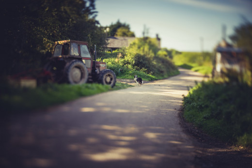 Tractor & Farm Dog - focus is pretty much a matter of moving the lens backwards and forwards!