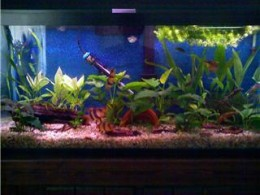 Give yourself time out anytime you want by having an aquarium for your fish therapy needs in your home.