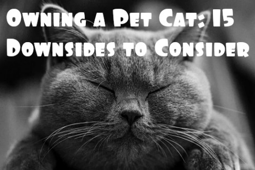 15 Reasons Not to Have a Pet Cat