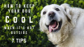 7 Tips to Keep Your Dog Cool This Summer
