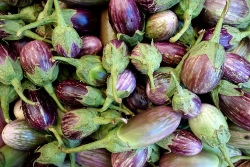 Brinjal or Eggplant