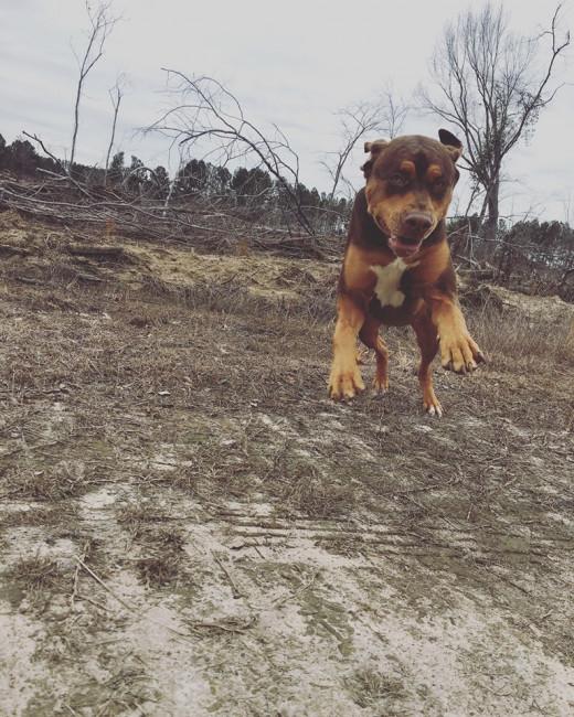 My dog named Moose!