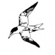 Jack Shorebird profile image