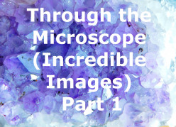 Through the Microscope (Incredible Images) Part 1
