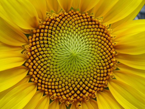 Sunflower seeds are a great source of vitamin E. Photo by Esdras Calderan.