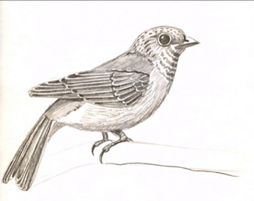 My pencil drawing of a bird someone wanted to have as a tattoo.