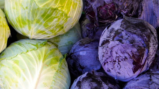 Red And White Cabbage