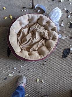 Bored Labrador Retriever Puppies Can Be Destructive