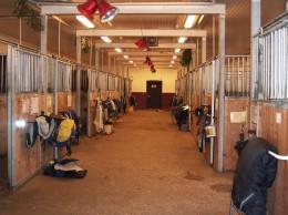 Professional Horse Stalls