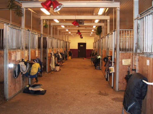 Professional Horse Stalls
