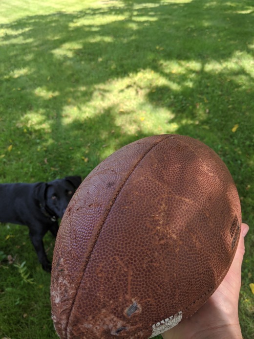Getting ready to throw the ball, dog seems aware of ball