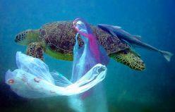 Turtle eating plastic bag
