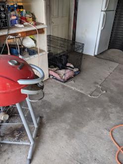 Crate Training a Labrador Retriever