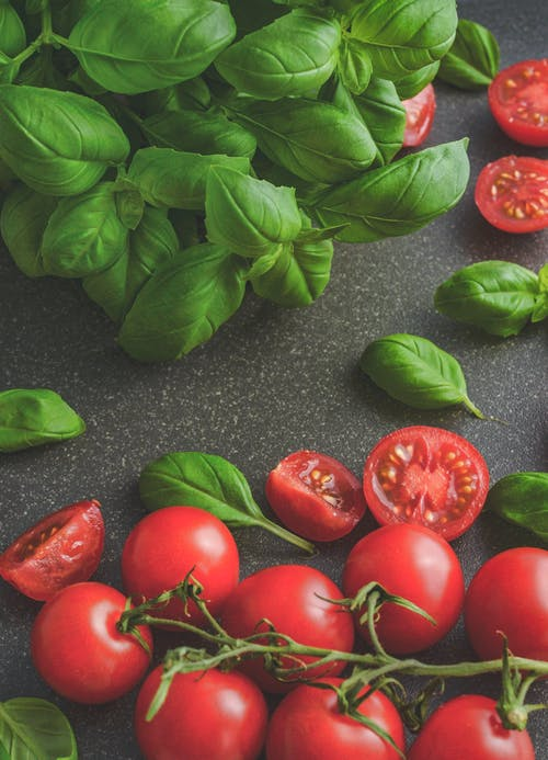 Fresh Basil (And Tomatoes For Human Consumption)