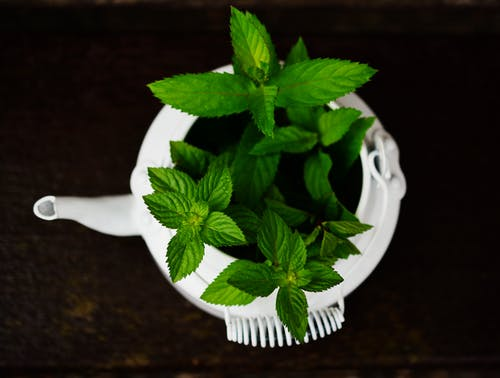 Fresh Peppermint Has a Calming, Comforting Aroma