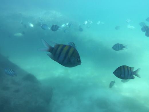 Underwater © Justina Janeliunaite