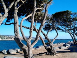 Some favorite Trees - How Trees add Value to our Lives