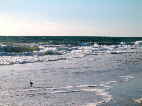 Waves breaking in the distance, while a little birds walks along looking for food to eat.