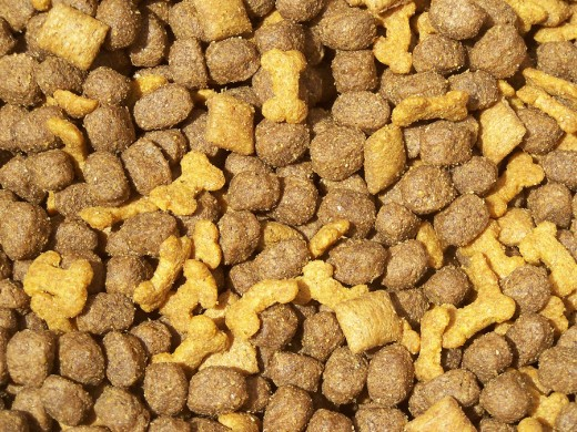 Feeding small portions to your large breed dog can reduce the chance bloat.