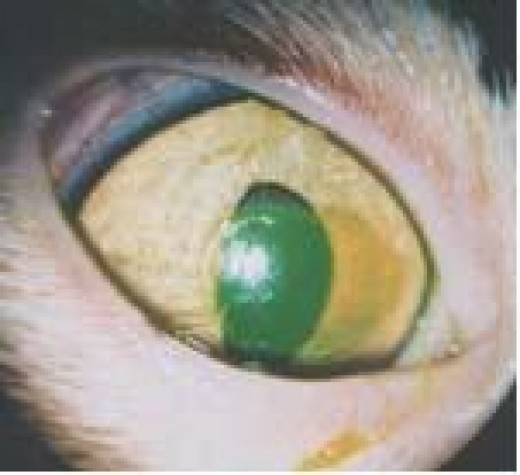 cat eye conjunctivitis