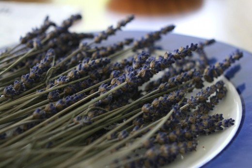 Freshly cut lavender flowers by Lexipexi