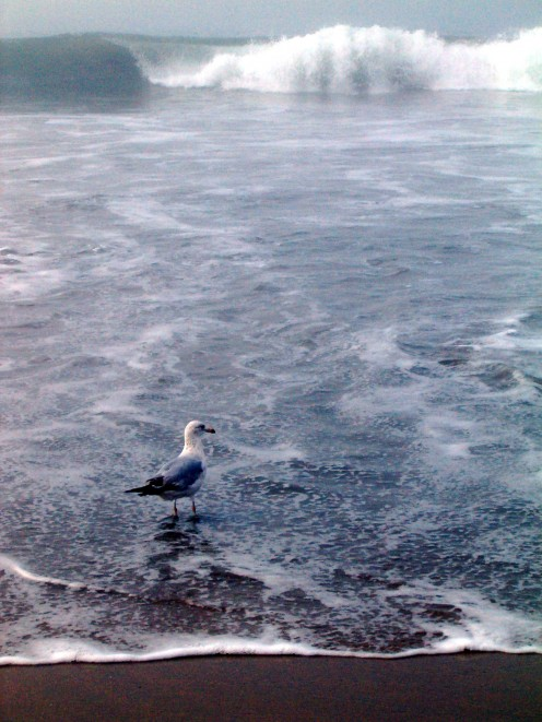 Bird along the shoreline, looking for food to eat.