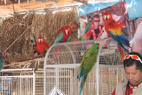 Have your pictures taken with exotic birds....there were at least eight different species oflive birds you'd expect to find in a tropical paradise...unusual photos to be sure!